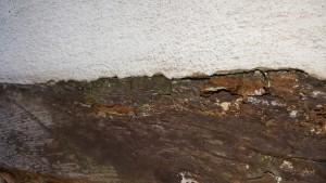 Holzfraß durch Zementputz 2